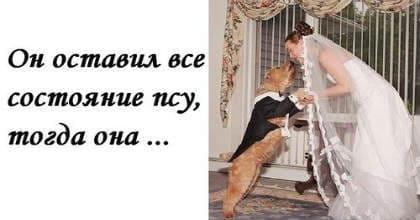 пес миллионер