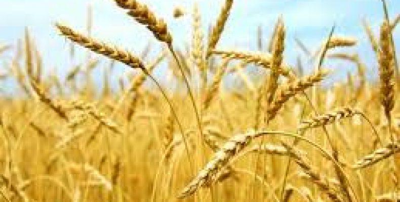 Отчет по прибыли 18 — 30 августа. Хорошая урожайная неделя.
