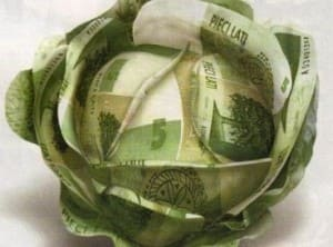 денежная капуста