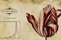 Тюльпаномания в Голландии или $2 млн. за цветок