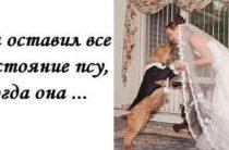 Собака миллионер или как выйти замуж за пса